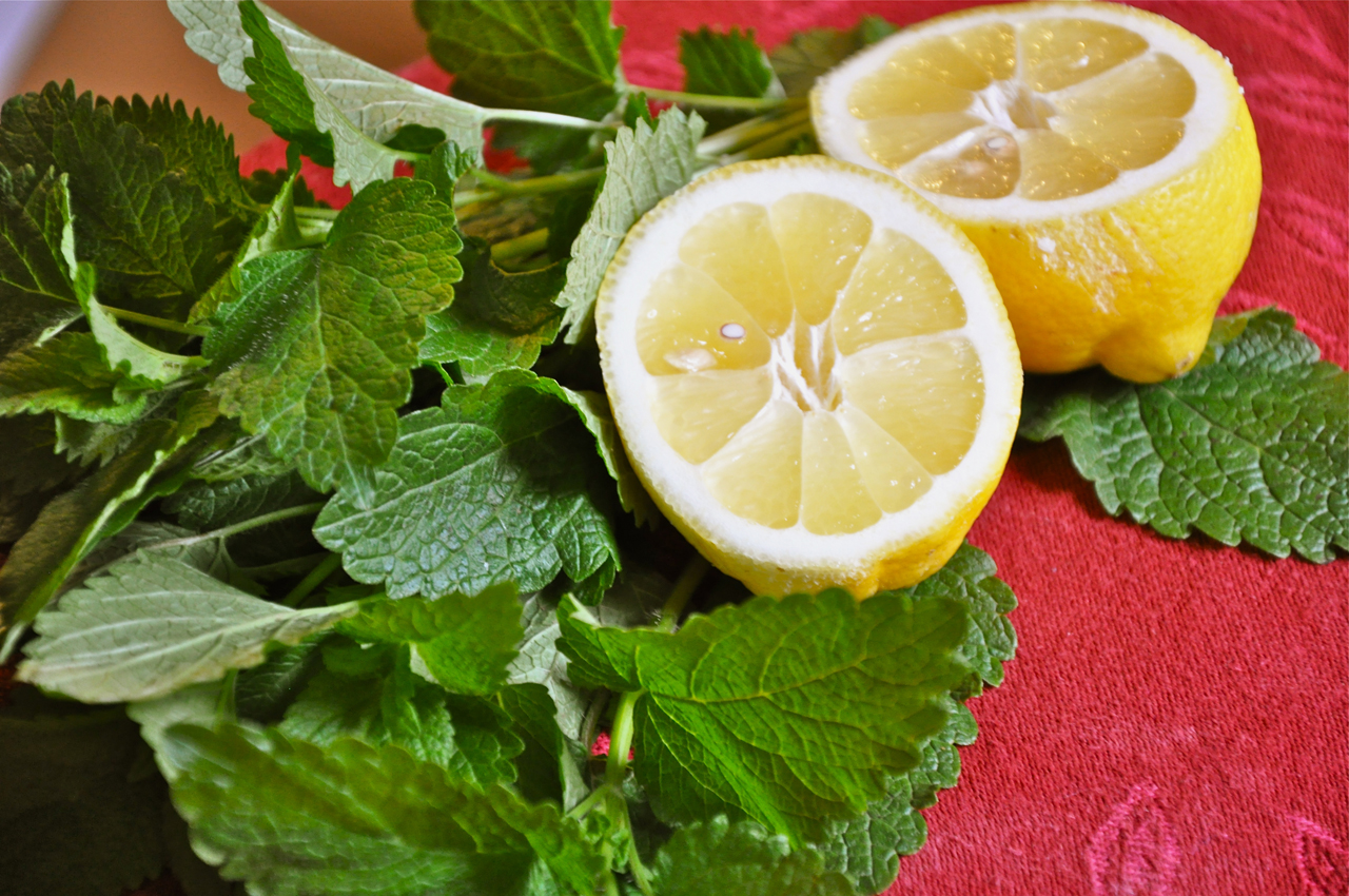 """lemonbalm thesis """"gas chromatography mass spectrometry determination of alcohol in project are lemon balm gas chromatography mass spectrometry determination of."""